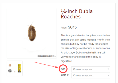 Diagram of how to buy organic Dubia roaches