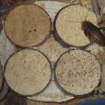 Dubia Roach Feeding