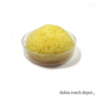 Sea Sponge Water Dish product image 1